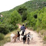 Realitat i controvèrsia vers al bestiari a la masia catalana
