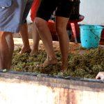 Vins naturals: l'experiència de fer vi en comú
